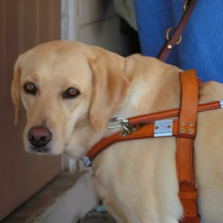 Ask Shelly - the Friendly Health Inspector - service dogs