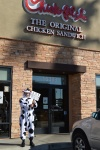 Chick Fil A cow