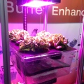 Cambro Food Box used as Hydroponics in Buffet Enhancements