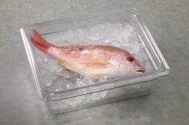 Colander w fish