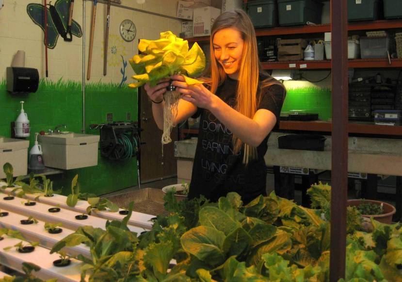 hydroponics SAE project